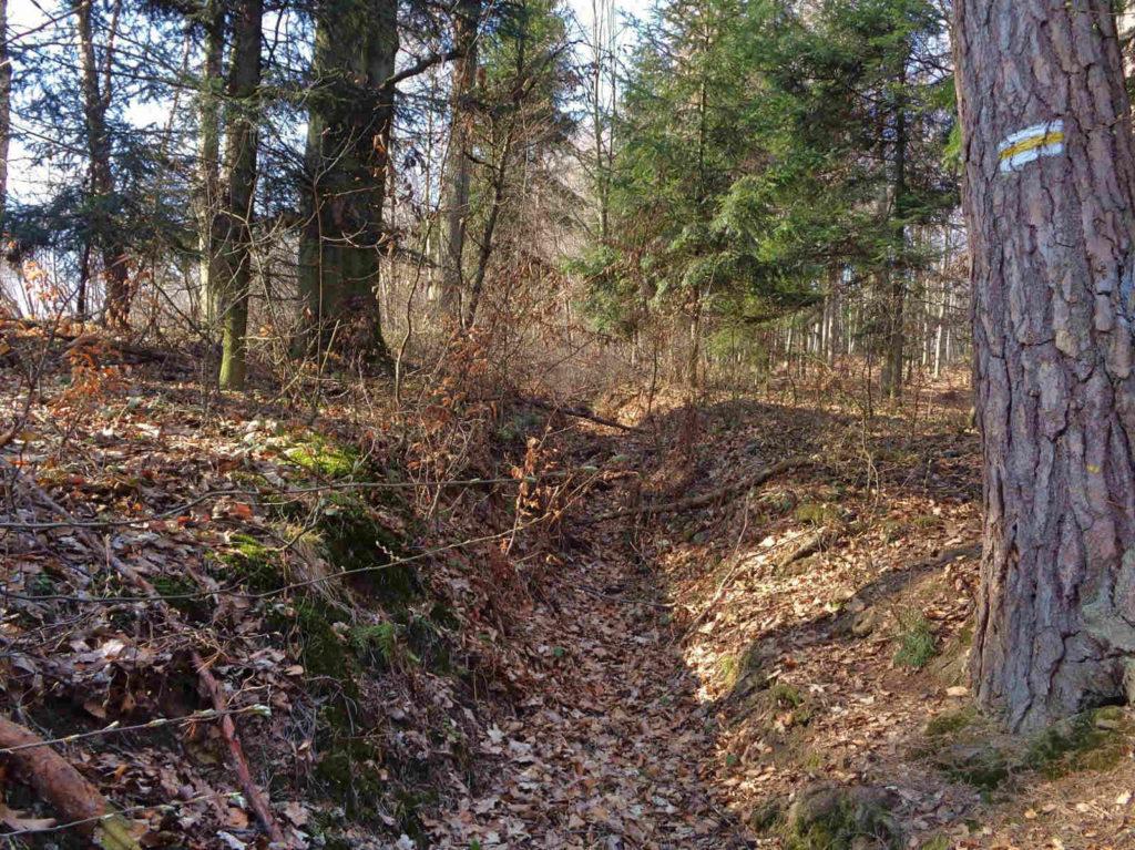 Jaroszowicka Góra, początek leśnego odcinka od strony Kleczy