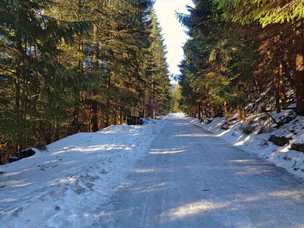 Niebieski szlak z Kuźnic w stronę Polany Kalatówki