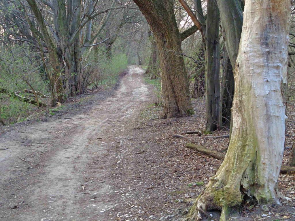 Szlak Dwóch Kopców na obrzeżach Lasu Wolskiego