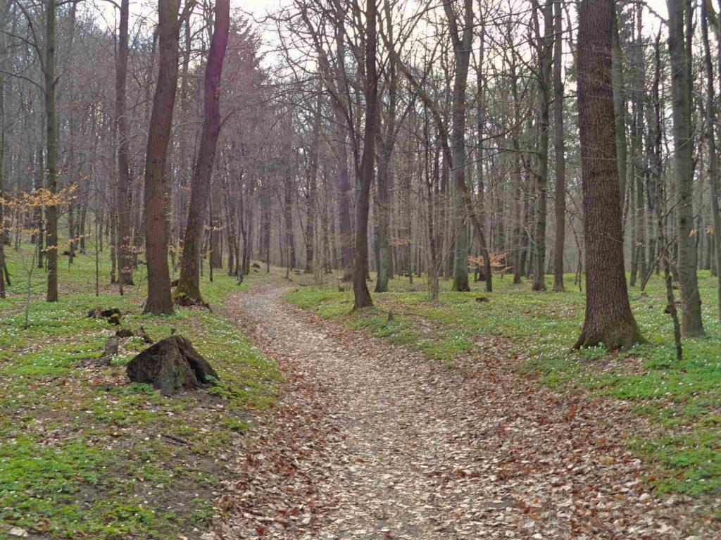 Wiosna w Lesie Wolskim