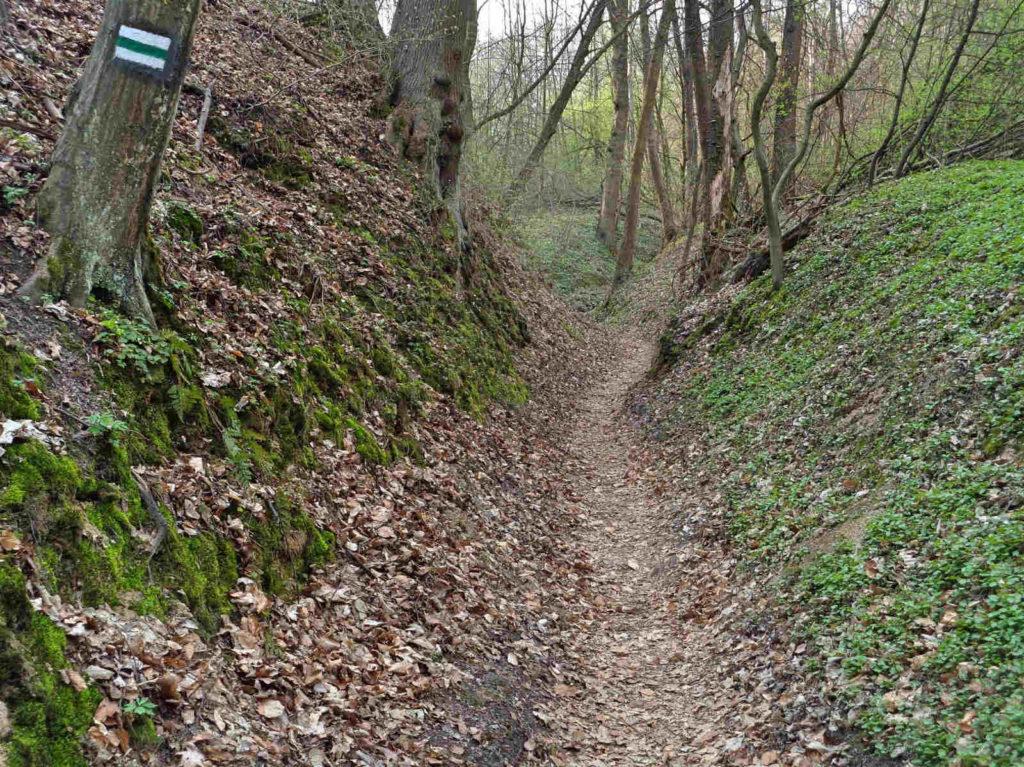 Las Wolski, zielony szlak