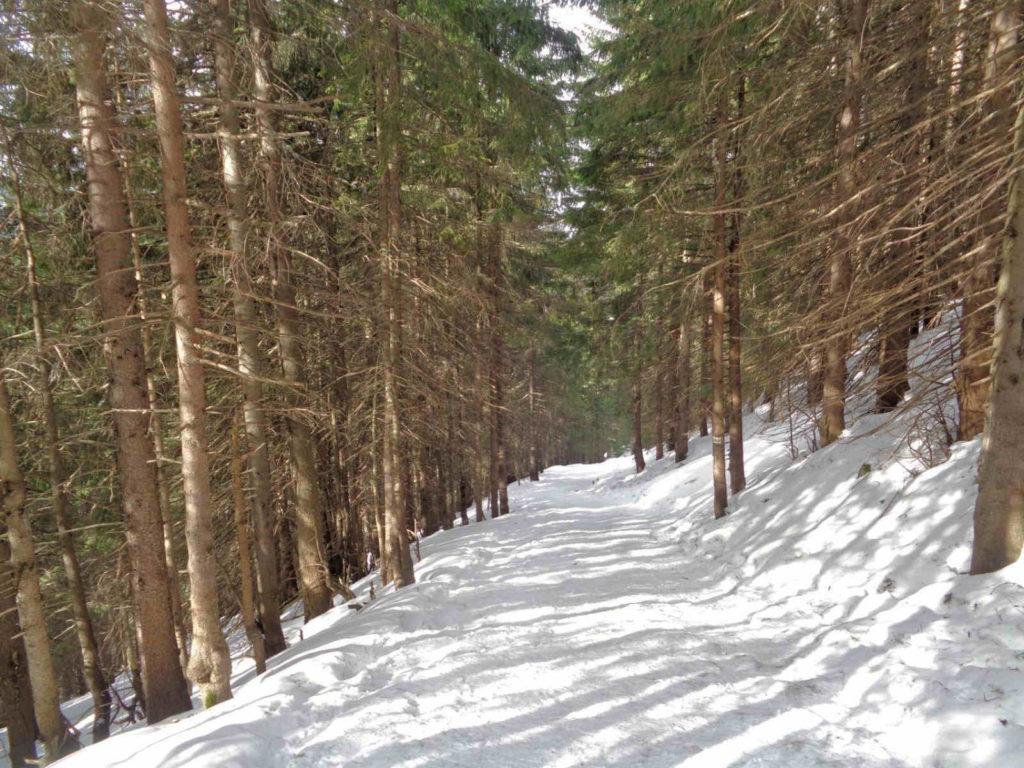 Zejście przez Dolinę Jaworzynki