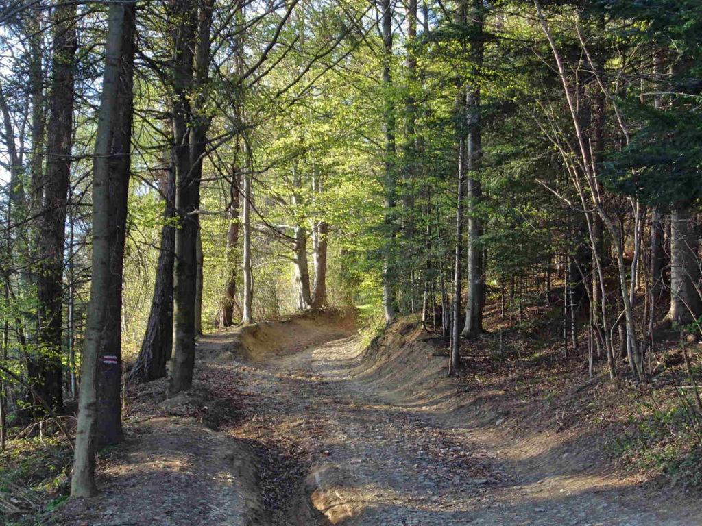 Lubań - czerwony szlak z Krościenka