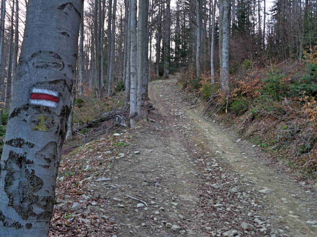 Czerwony szlak na Lubań - końcowe podejście