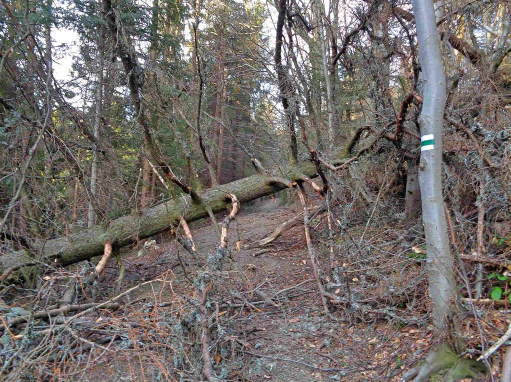 Powalone drzewa na szlaku do Tylmanowej