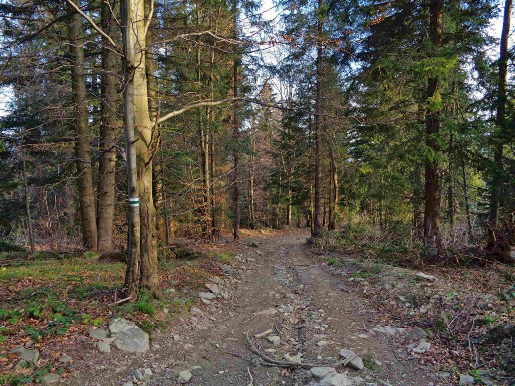 Zielony szlak z Lubania do Tylmanowej