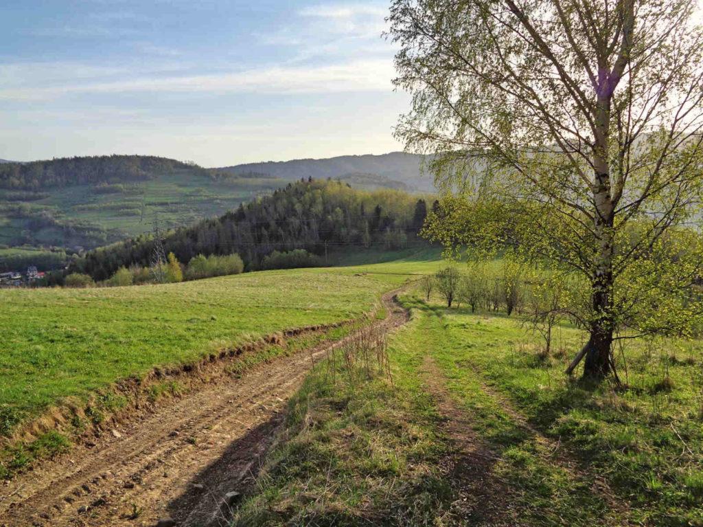 Zielony szlak - widok na Basztę