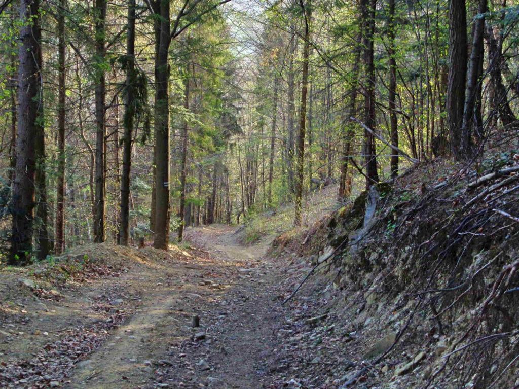 Zielony szlak - strome zejście