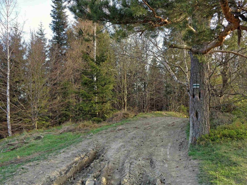 Zejście z Lubania zielonym szlakiem
