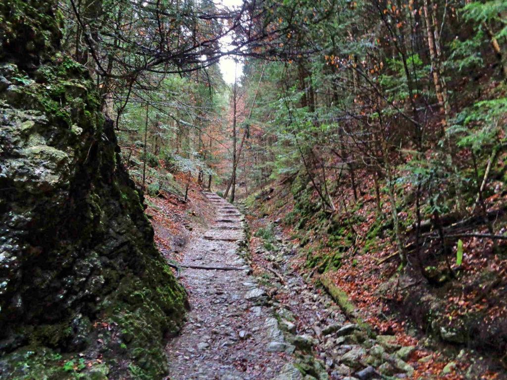 Szlak na Przełęcz Szopka