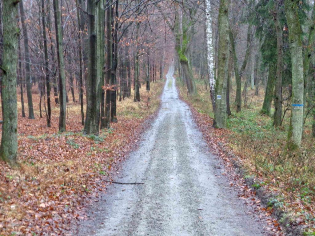 Szlaki w Lesie Bronaczowa