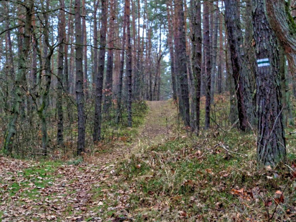 Puszcza Niepołomicka, las
