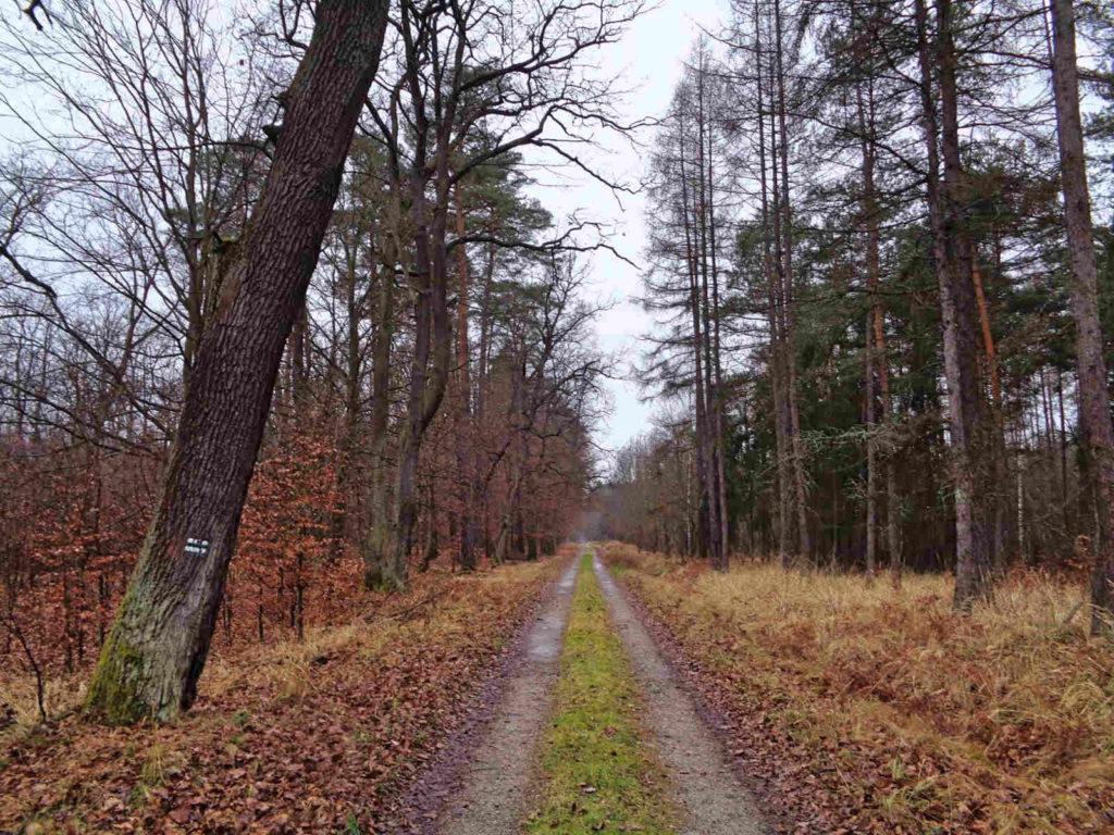 Puszcza Niepołomicka, szlak zielony