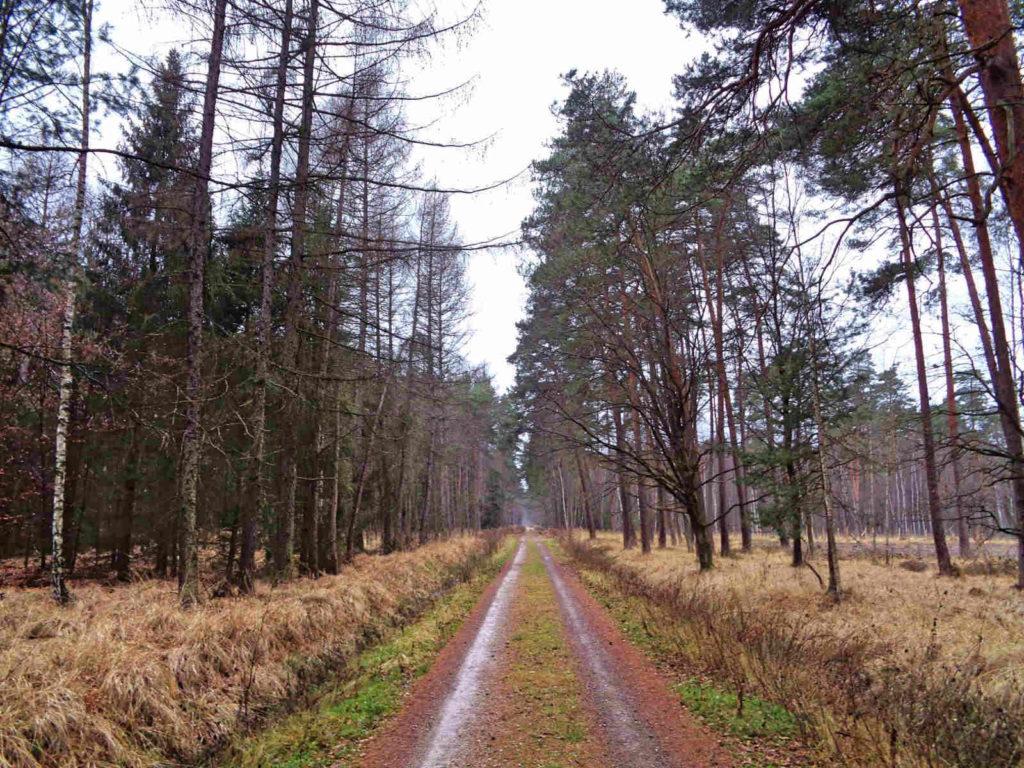 Puszcza Niepołomicka. szlaki piesze