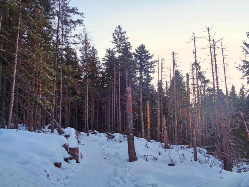 Szlak na Przełęcz Między Kopami