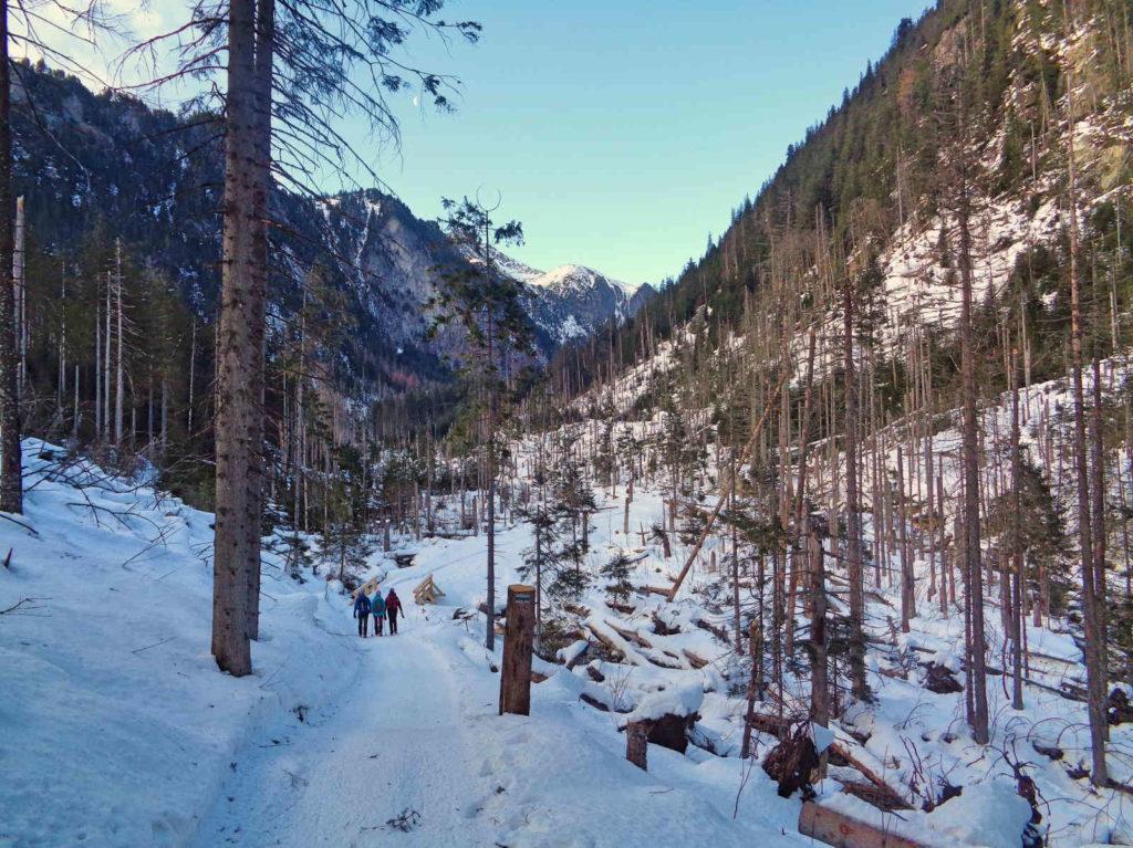 Dolina Roztoki w zimie