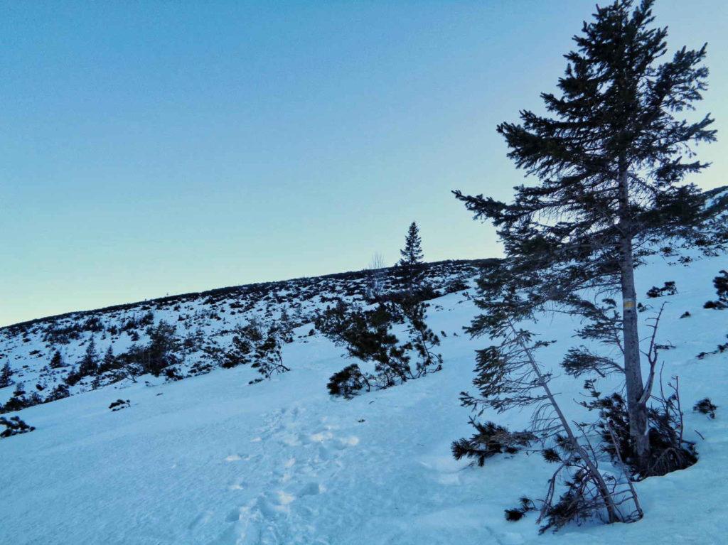 Krzyżne od Murowańca w zimie