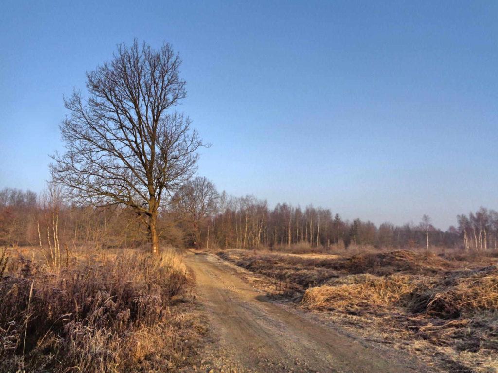 Las Bojarowicza, niebieski szlak