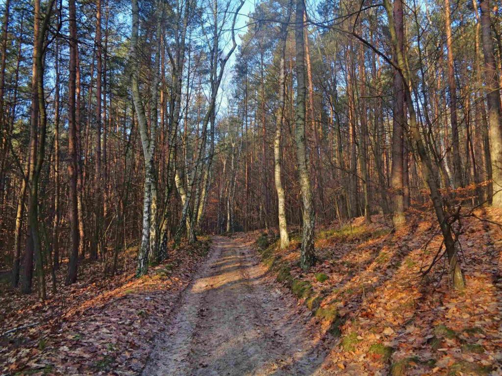 Las Bojarowicza, szlaki turystyczne