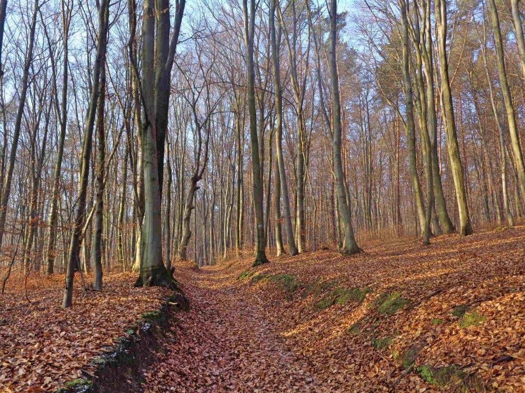 Szlaki w Lesie Bojarowicza