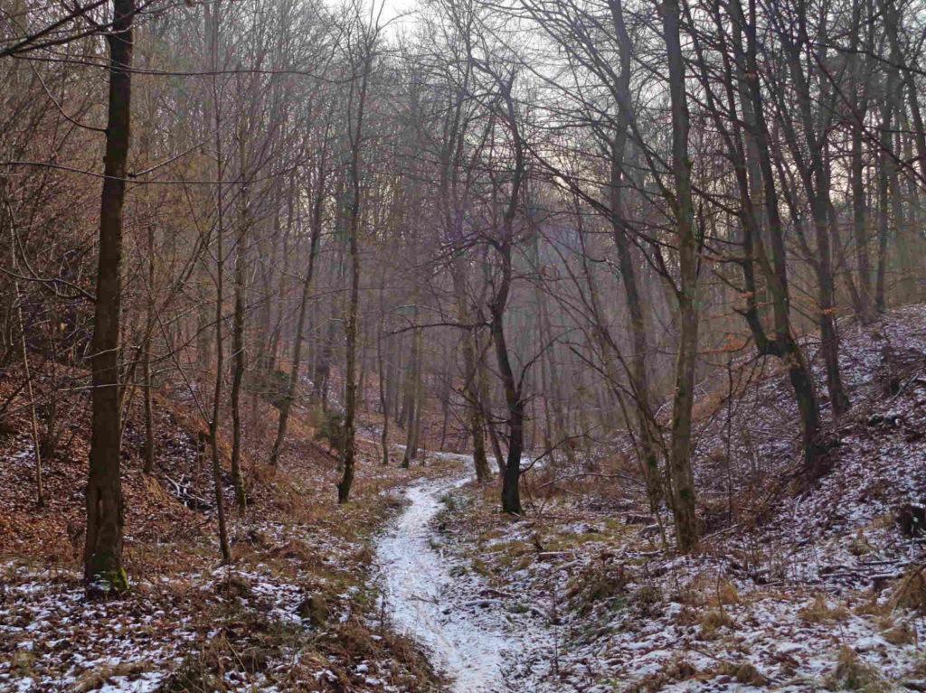 Las Zabierzowski, niebieski szlak