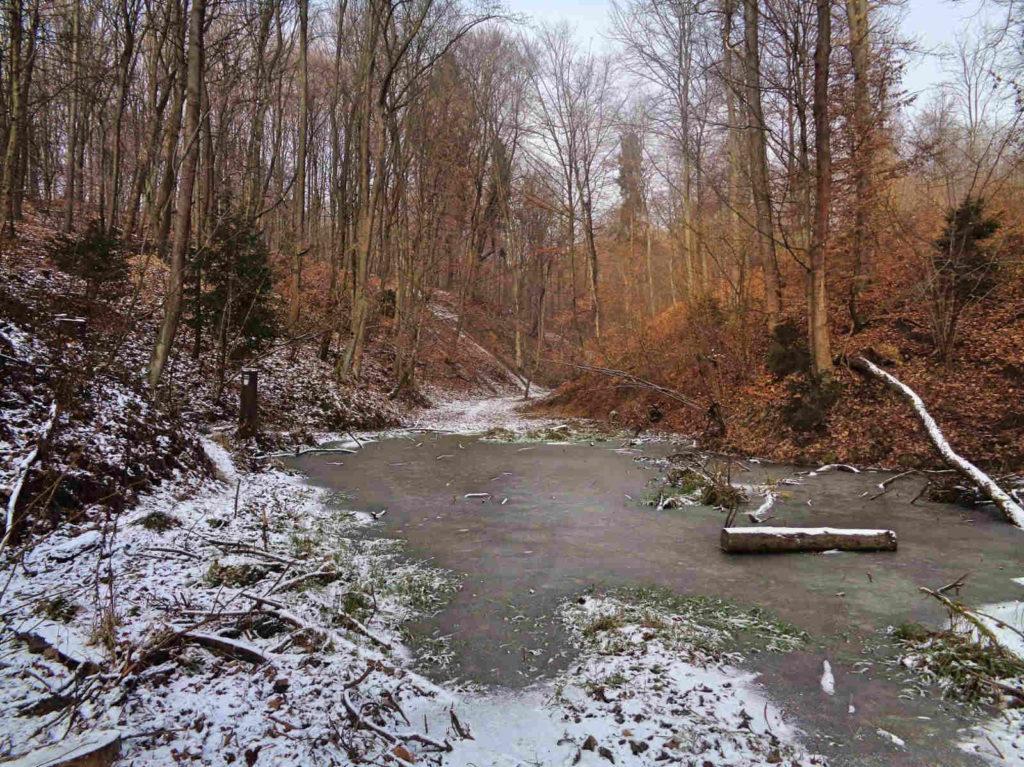 Las Zabierzowski zimą
