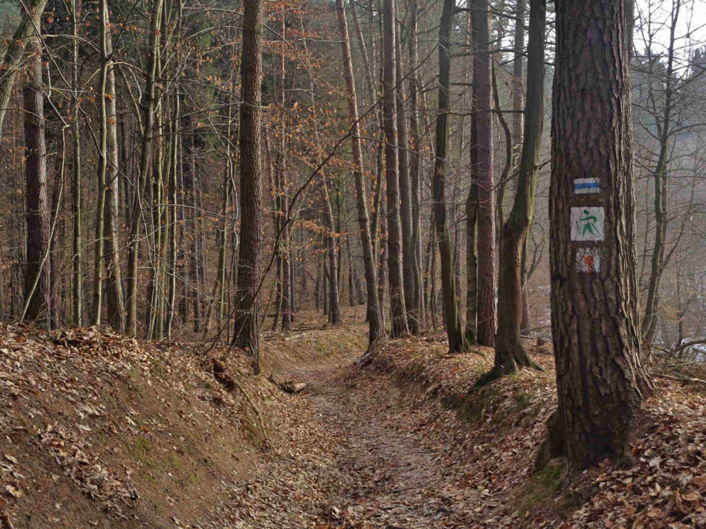 Szlaki w Lesie Zabierzowskim