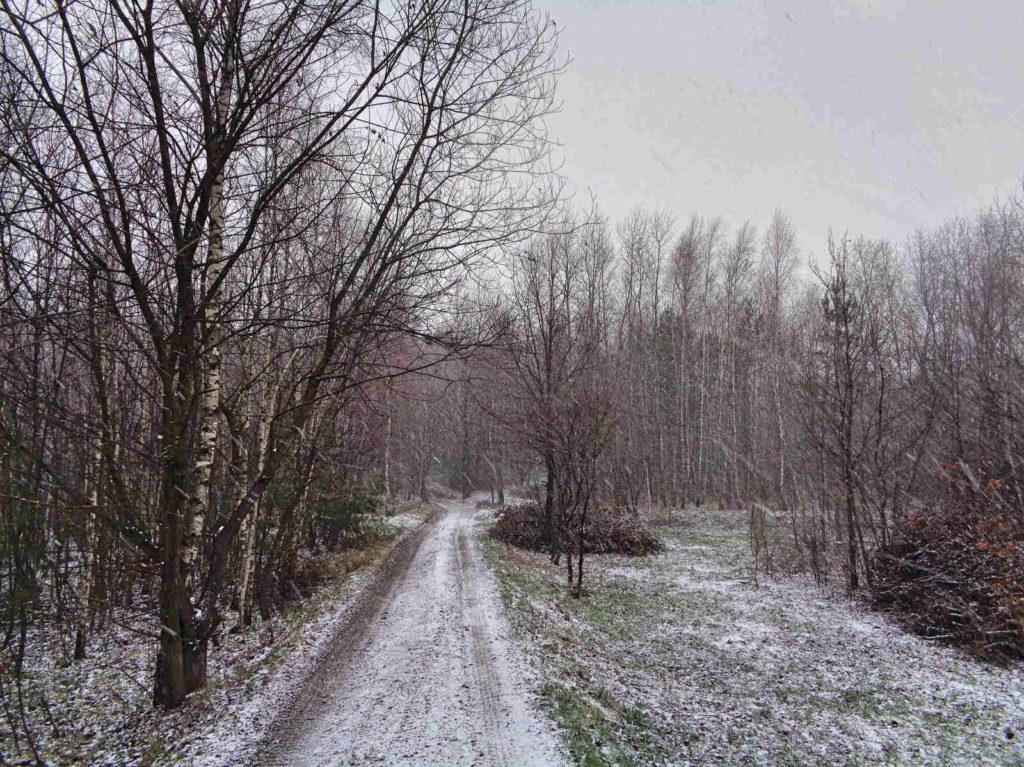 Bukowiec zimą