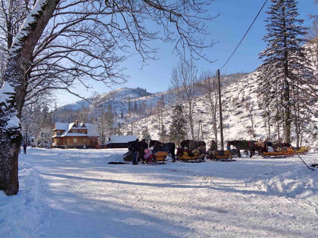 Dolina Kościeliska, konie