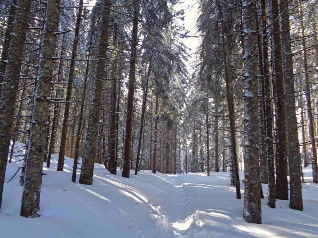 Szlak do Smreczyńskiego Stawu zimą