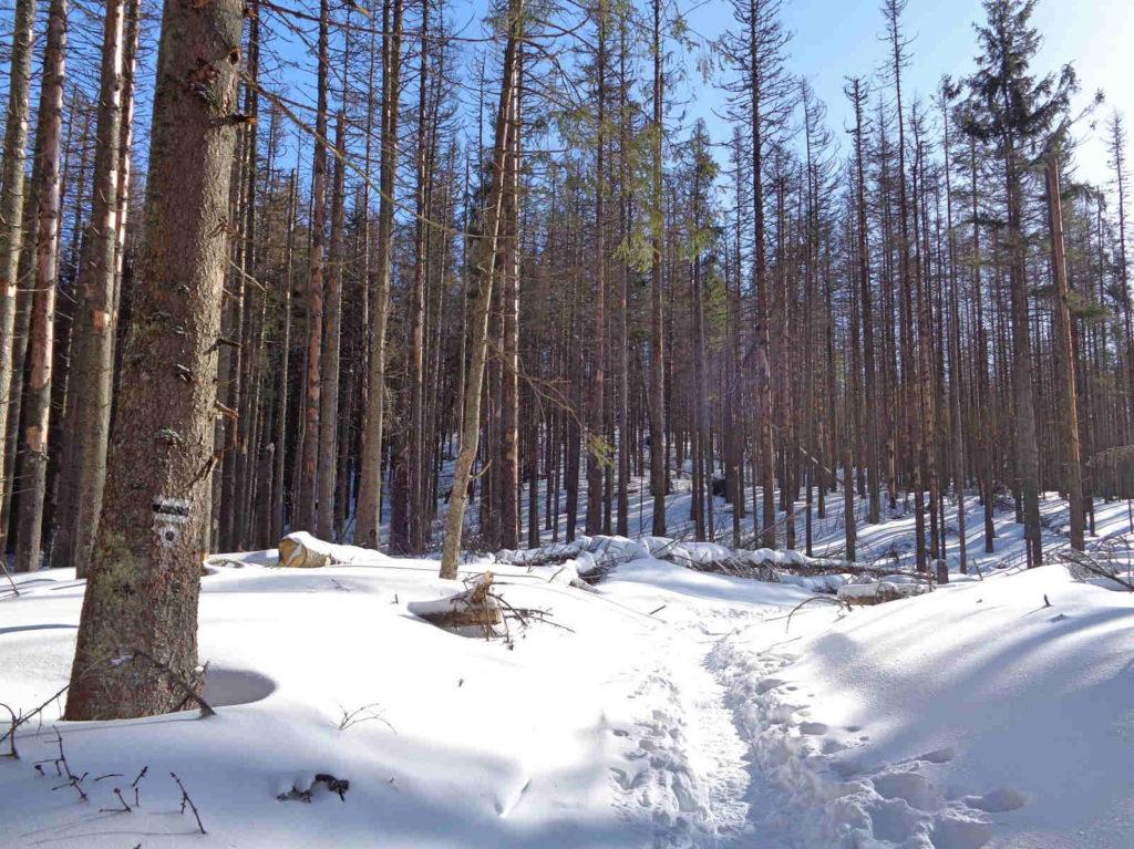 Szlak nad Smreczyński Staw zimą