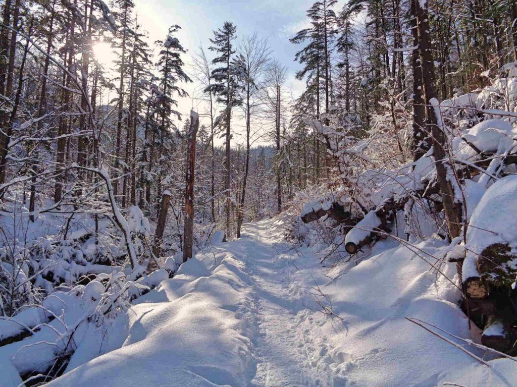 Dolina ku Dziurze w zimie