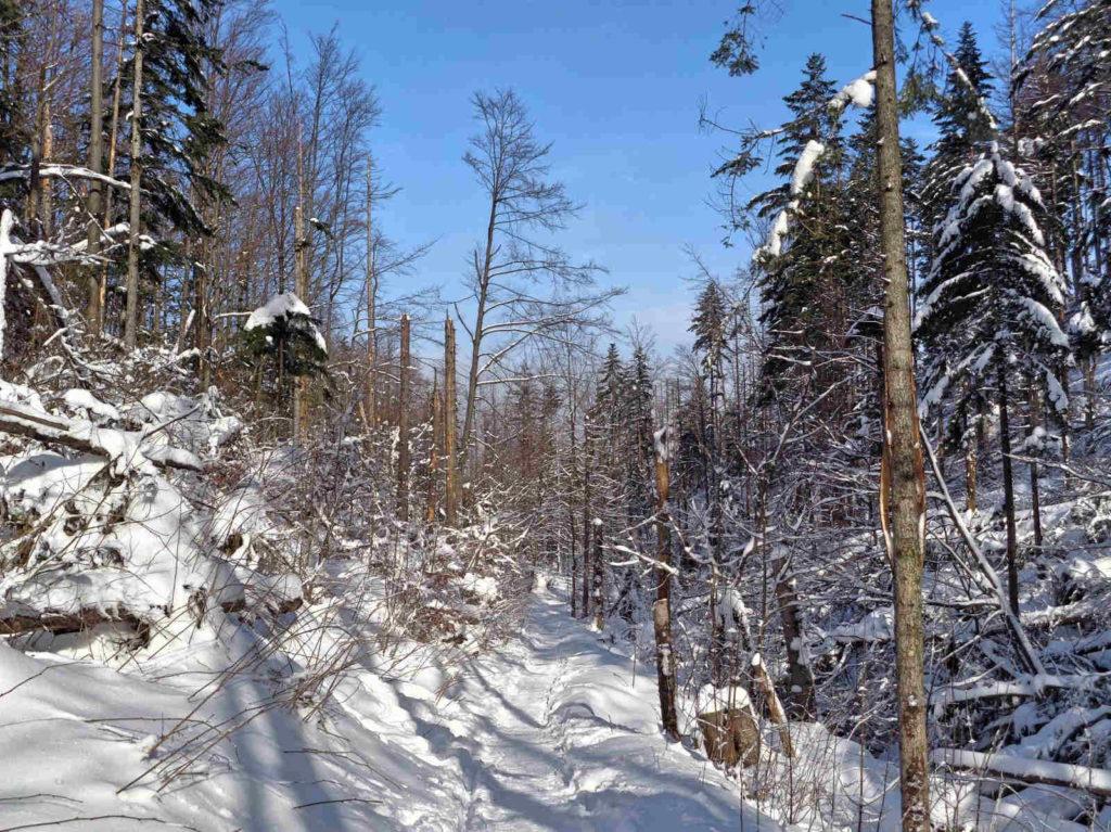 Dolina ku Dziurze zimą