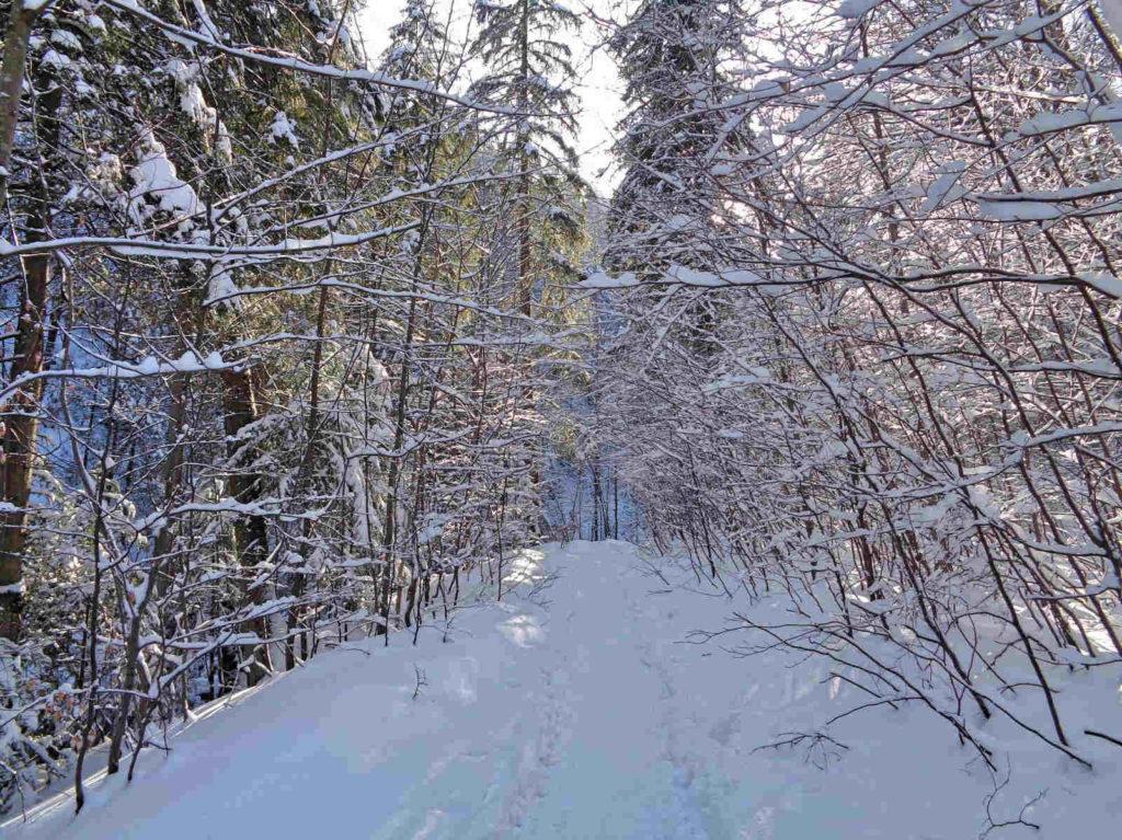 Dolina za Bramką, Tatry