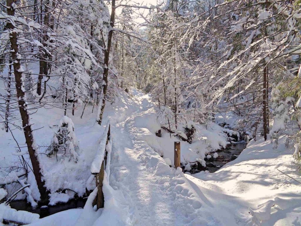 Dolina za Bramką w zimie