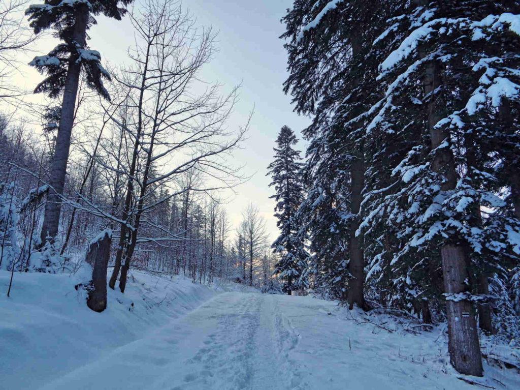Droga pod Reglami, szlak w zimie