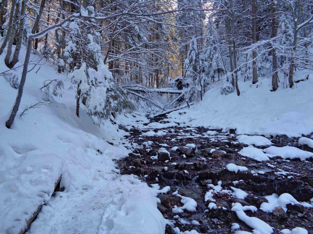 Potok zza Bramki