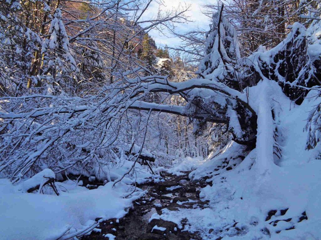 Potok zza Bramki zimą