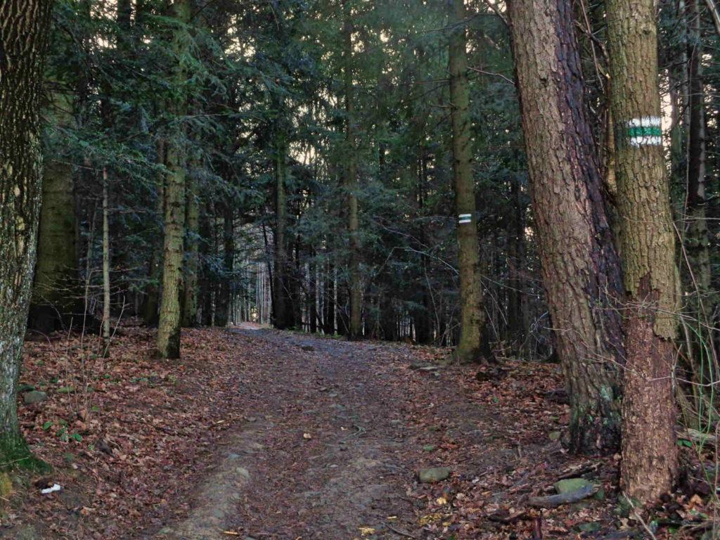Góra Chełm, zielony szlak