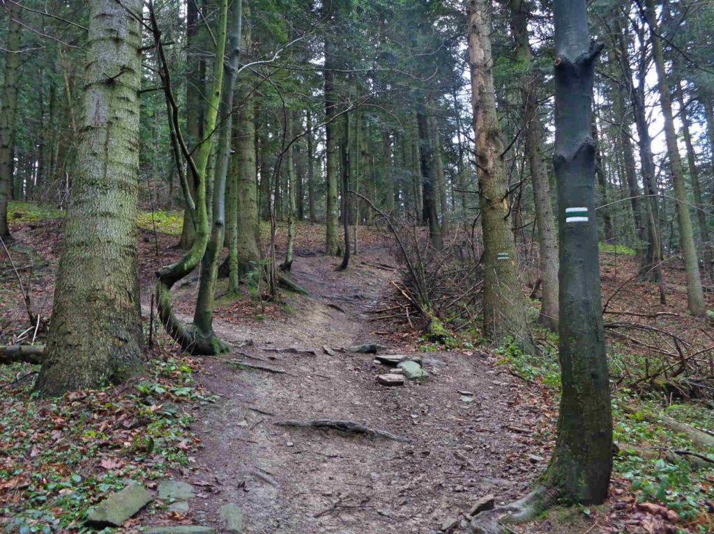 Zielony szlak na Górę Chełm