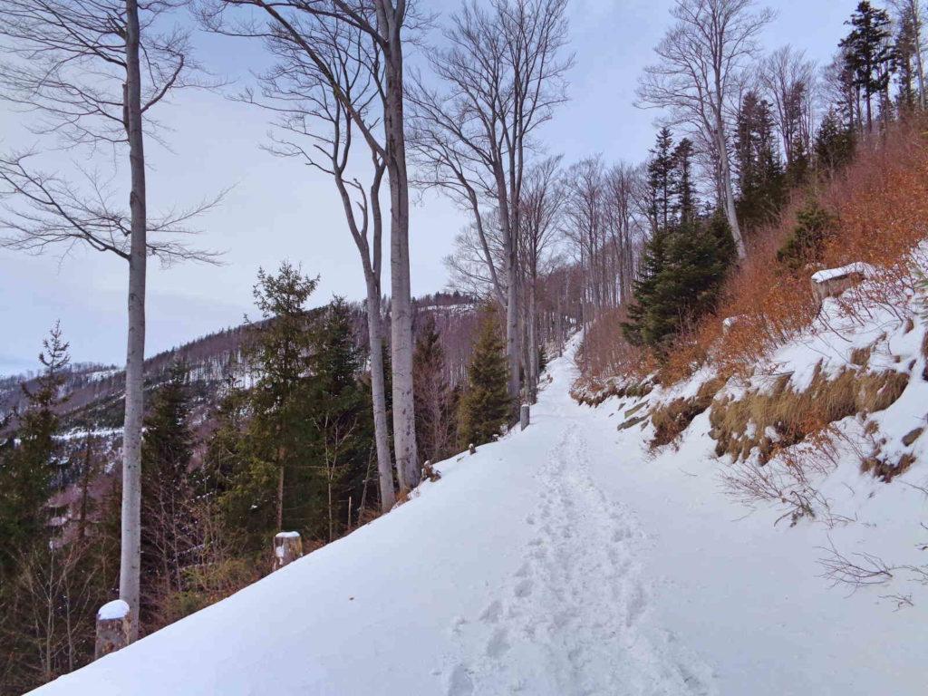 Klimczok, niebieski szlak w zimie