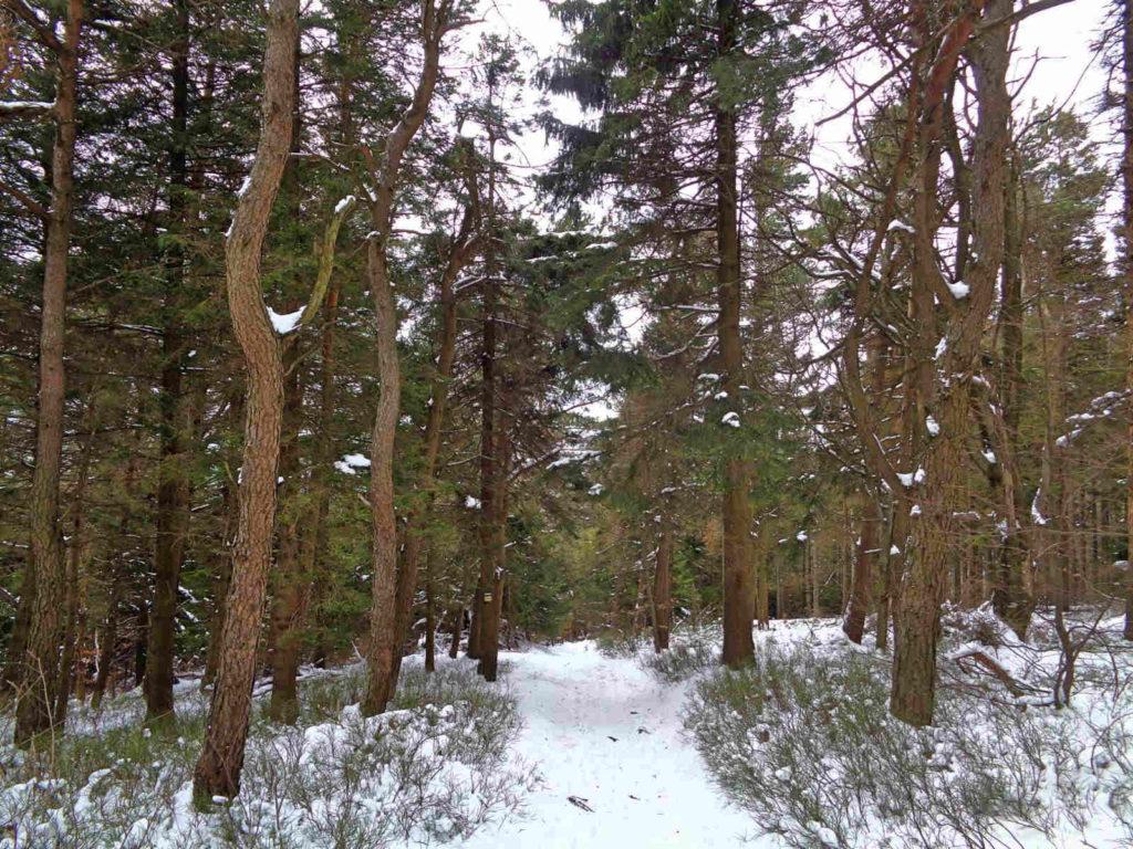 Szyndzielnia, szlaki w zimie