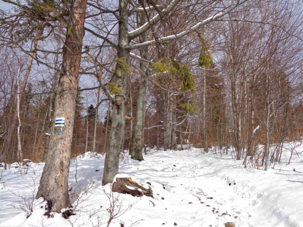 Zimowe wejście na Klimczok