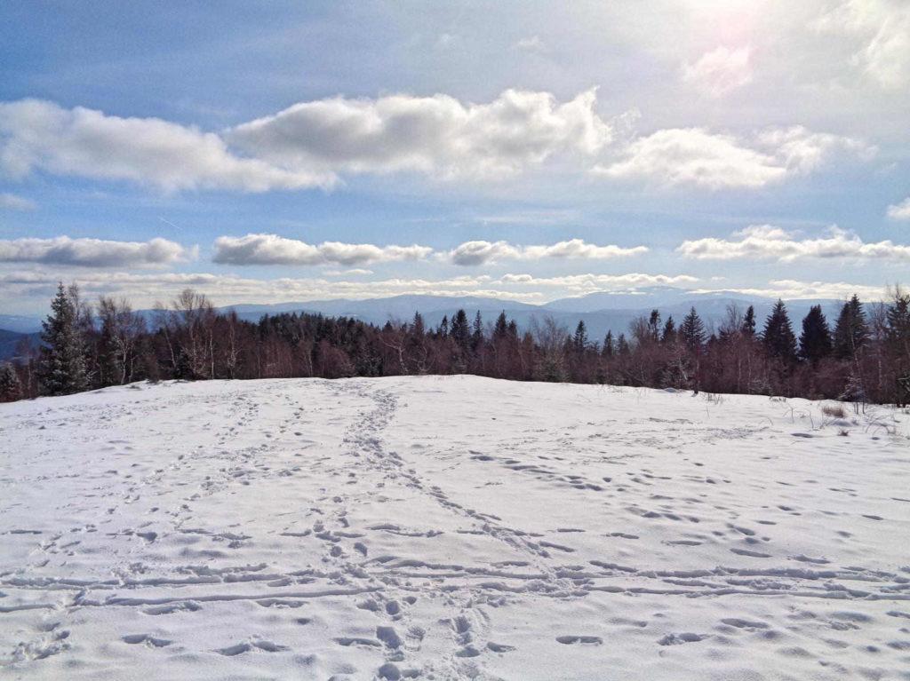 Leskowiec w zimie