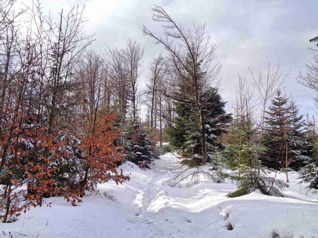 Mały Szlak Beskidzki w zimie