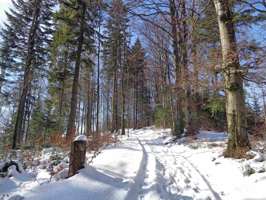 Mały Szlak Beskidzki zimą
