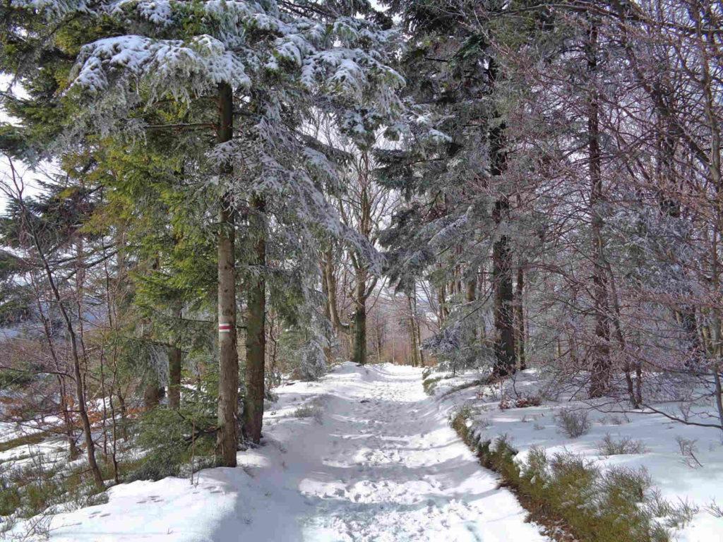 MSB zimą