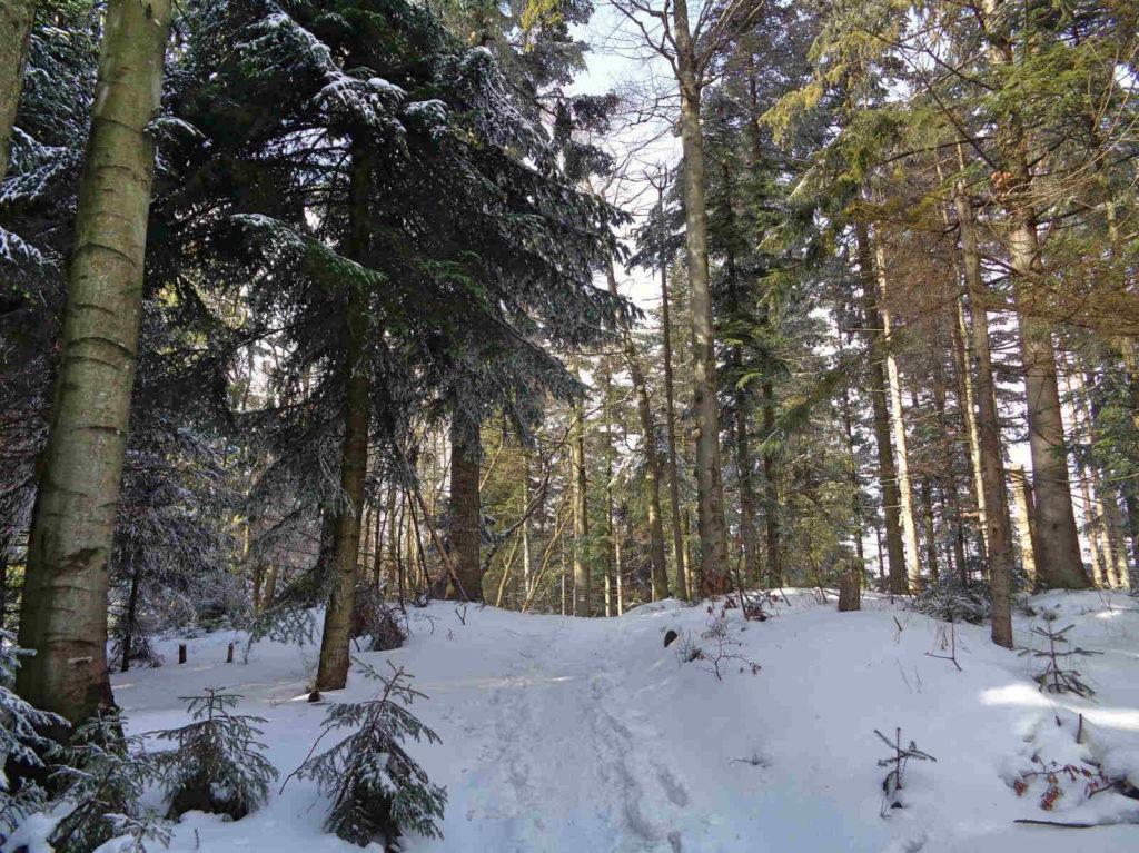 Szlak Leskowiec - Potrójna