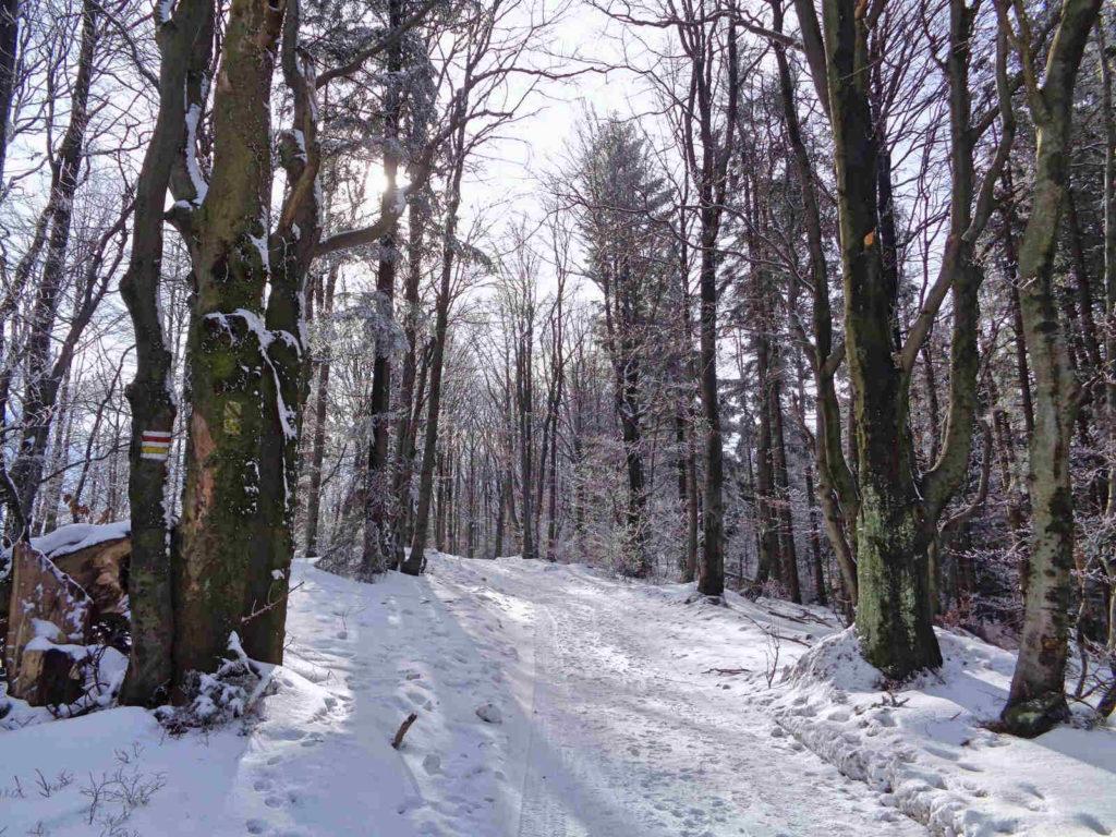 Szlak na Leskowiec