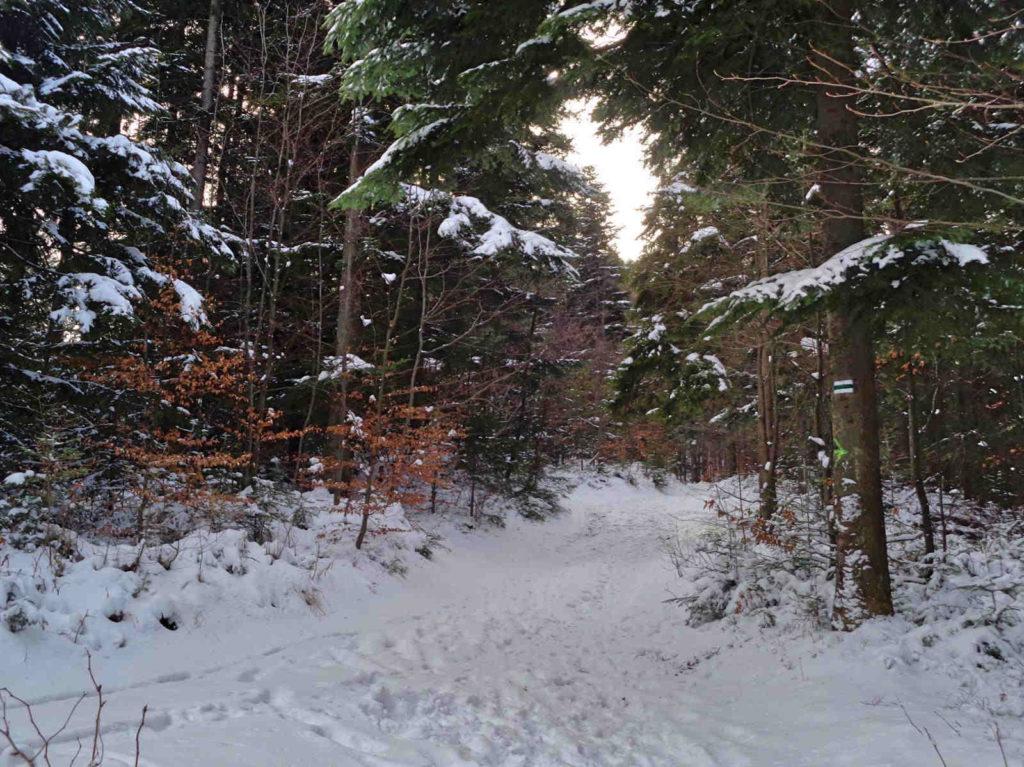 Skrzyczne, szlak zielony zimą